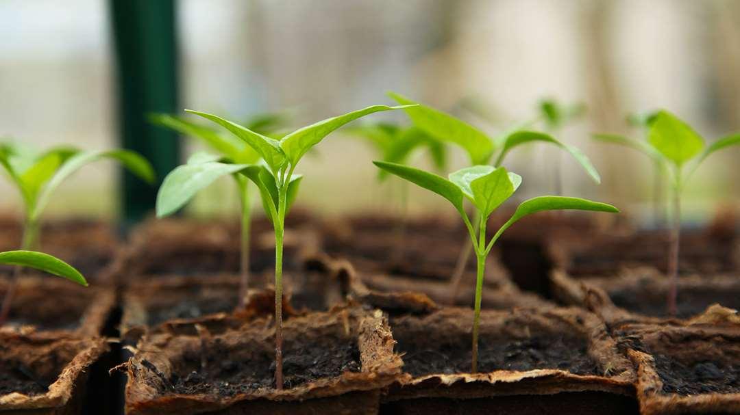 Decorum duurzaamheid certificaten & gewasbescherming