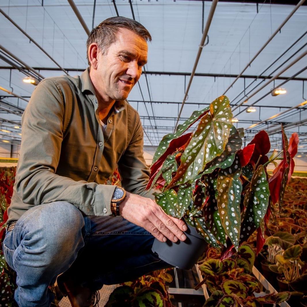 Duynplant - Decorum kweker